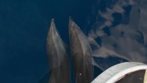 cropped-Dolphin-23-Good-20xp1y6-1gl8ig4.jpg